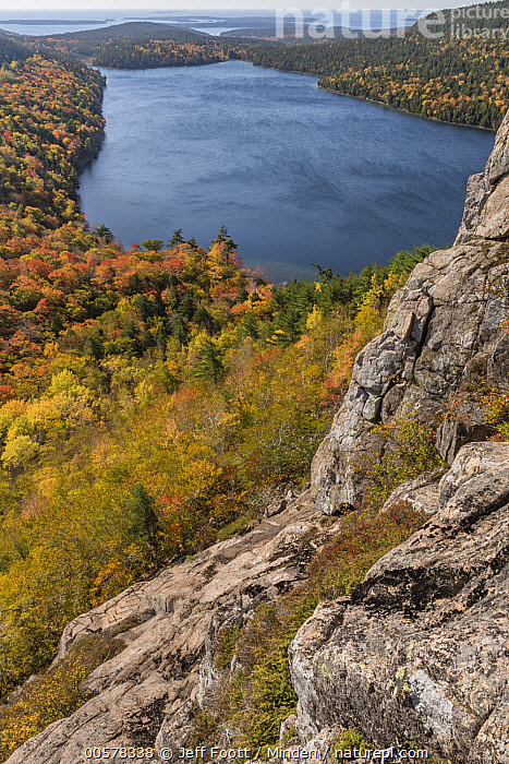 Deciduous forest and pond in autumn, Jordan Pond, Mount Desert Island, Acadia National Park, Maine, Acadia National Park, Autumn, Canopy, Color Image, Day, Deciduous, Deciduous Forest, Fall Colors, Forest, Jordan Pond, Landscape, Maine, Mount Desert Island, Nobody, Orange, Outdoors, Photography, Vertical, Yellow,Maine, USA, Jeff Foott