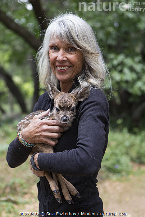 Mule Deer (Odocoileus hemionus) conservationist, Diane Nicholas, holding three day old orphaned fawn, Kindred Spirits Fawn Rescue, Loomis, California  ,  Baby, California, Captive, Carrying, Caucasian Appearance, Color Image, Conservation, Conservationist, Cute, Day, Diane Nicholas, Fawn, Female, Front View, Full Length, Holding, Kindred Spirits Fawn Rescue, Looking at Camera, Loomis, Mature Adult, Mule Deer, Newborn, Odocoileus hemionus, One Animal, One Person, Orphan, Outdoors, Photography, Rehabilitation, Rescuing, Side View, Smiling, Vertical, Waist Up, Wildlife, Woman,Mule Deer,California, USA  ,  Suzi Eszterhas