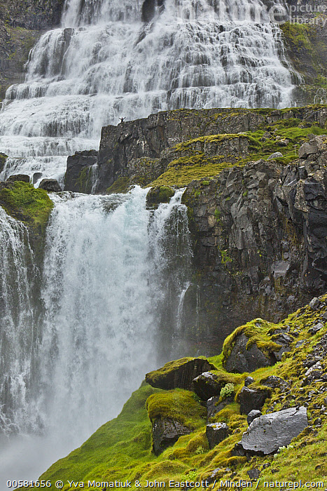 Tourist next to cascades, Dynjandi Waterfall, Westfjords, Iceland, Cascade, Color Image, Day, Dynjandi Waterfall, Front View, Full Length, Human in Landscape, Iceland, Landscape, One Person, Outdoors, Photography, Scale, Tourism, Tourist, Vertical, Waterfall, Westfjords,Iceland, Yva Momatiuk & John Eastcott