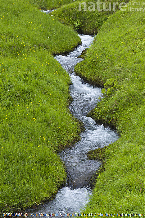 Stream in spring meadow, Haganesvik, Iceland  ,  Abstract, Color Image, Day, Haganesvik, Iceland, Landscape, Lush, Meadow, Nature Pattern, Nobody, Outdoors, Photography, Spring, Stream, Vertical,Iceland  ,  Yva Momatiuk & John Eastcott