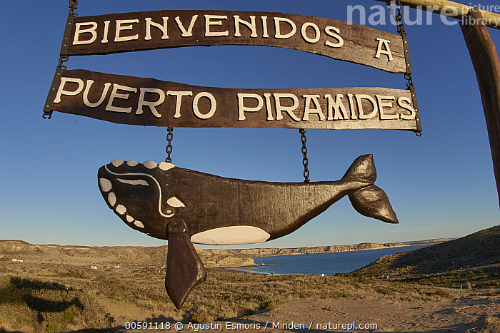 Rights Whale sign, Puerto Piramides, Peninsula Valdez, Chubut, Argentina, Argentina, Chubut, Color Image, Day, Horizontal, Nobody, Outdoors, Peninsula Valdez, Photography, Puerto Piramides, Right Whale, Sign, Whale, Agustin Esmoris