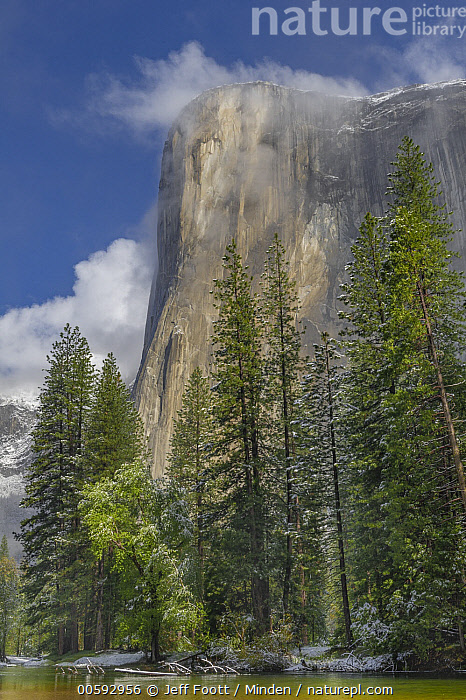Granite cliff in mist, El Capitan, Yosemite National Park, California, Blue Sky, California, Cliff, Color Image, Day, El Capitan, Granite, Landscape, Mist, Mountain, Nobody, Outdoors, Photography, Vertical, Yosemite National Park, Jeff Foott