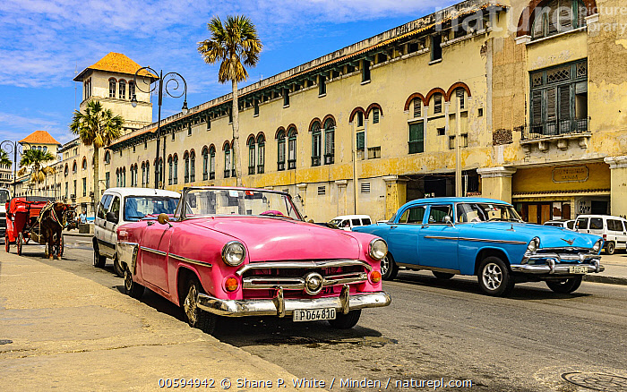 Vintage cars, Havana, Cuba  ,  Building, Car, City, Color Image, Cuba, Day, Havana, Historical, Horizontal, Nobody, Outdoors, Photography  ,  Shane P. White