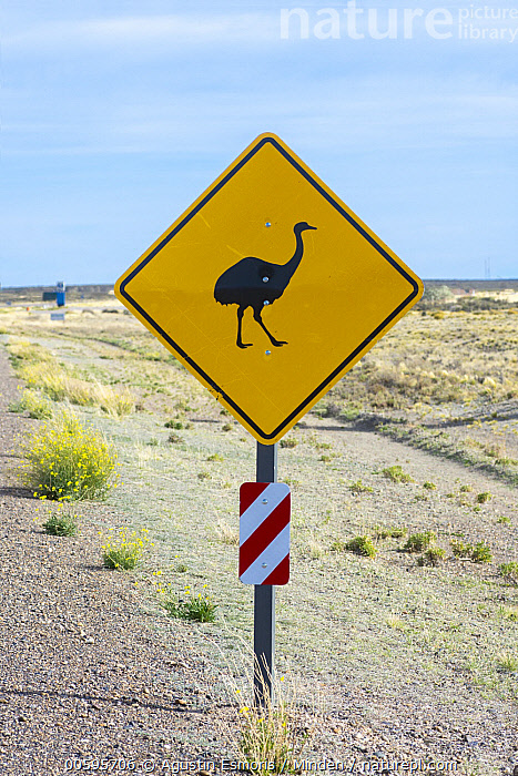 Lesser Rhea (Rhea pennata) road sign, Argentina, Adult, Argentina, Color Image, Conservation, Day, Front View, Full Length, Lesser Rhea, Nobody, One Object, Outdoors, Photography, Rhea pennata, Road, Vertical, Warning Sign, Wildlife, Agustin Esmoris