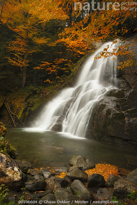 Waterfall in autumn, Moss Glen Falls, Vermont  ,  Autumn, Color Image, Day, Fall Colors, Landscape, Long Exposure, Moss Glen Falls, Nobody, Orange, Outdoors, Photography, Time Exposure, Tranquility, Vermont, Vertical, Waterfall  ,  Chase Dekker