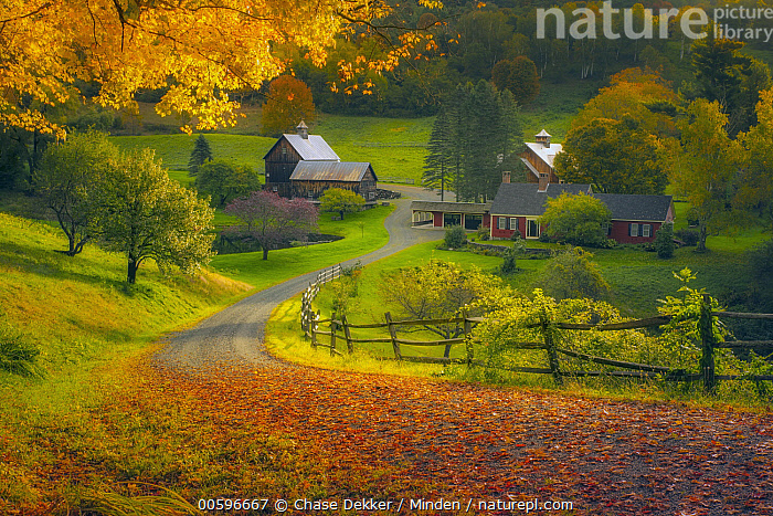 Deciduous forest and barn in autumn, Woodstock, Vermont  ,  Autumn, Barn, Color Image, Day, Deciduous Forest, Fall Colors, Farm, Horizontal, Landscape, Nobody, Orange, Outdoors, Photography, Red, Rural, Vermont, Woodstock  ,  Chase Dekker