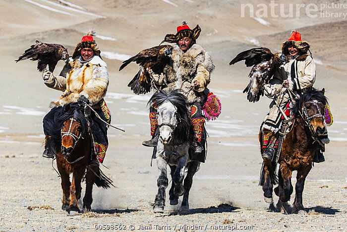 Golden Eagle (Aquila chrysaetos) hunters on horseback, Altai Mountains, Bayan Ulgii, Mongolia  ,  Adult, Altai Mountains, Aquila chrysaetos, Asian Ethnicity, Bayan Ulgii, Carrying, Color Image, Day, Falconer, Female, Formation, Front View, Full Length, Golden Eagle, Horizontal, Horseback Rider, Hunter, Looking at Camera, Male, Man, Medium Group of Animals, Mid Adult, Mongolia, Outdoors, Photography, Side View, Three People, Wildlife, Woman  ,  Jami Tarris