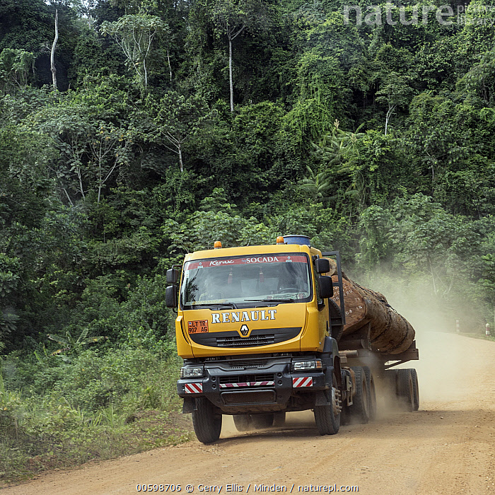 Logging truck heading south from Yabassi area tropical rainforest, Cameroon  ,  Cameroon, Color Image, Day, Deforestation, Environmental Issue, Industry, Log, Logging, Nobody, Outdoors, Photography, Square, Truck  ,  Gerry Ellis