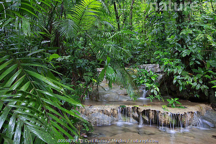 Creek in primary tropical rainforest, Golfito, Costa Rica  ,  Color Image, Costa Rica, Creek, Day, Golfito, Horizontal, Interior, Landscape, Long Exposure, Lush, Nobody, Outdoors, Photography, Time Exposure, Tropical Rainforest  ,  Cyril Ruoso