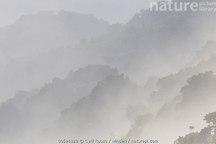Tropical rainforest in mist, Osa Peninsula, Costa Rica  ,  Color Image, Costa Rica, Day, Horizontal, Landscape, Mist, Moody, Mountain, Mountain Range, Nobody, Osa Peninsula, Outdoors, Photography, Silhouette, Tropical Rainforest  ,  Cyril Ruoso