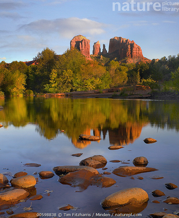 Cathedral Rock reflected in Oak Creek, Sedona, Arizona  ,  Arizona, Blue Sky, Cathedral Rock, Color Image, Day, Landscape, Nobody, Oak Creek, Outdoors, Photography, Reflection, Rock Formation, Sedona, Vertical  ,  Tim Fitzharris