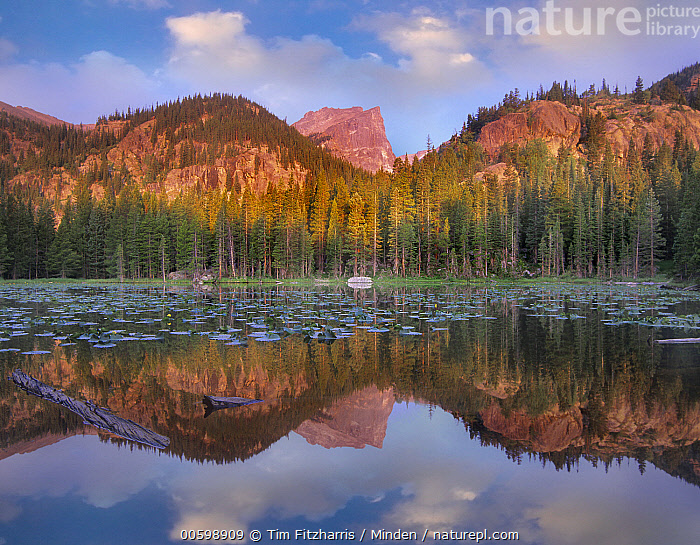 Hallett Peak, Nymph Lake, Rocky Mountain National Park, Colorado  ,  Blue Sky, Color Image, Colorado, Day, Hallett Peak, Horizontal, Landscape, Mountain, Mountain Range, Nobody, Nymph Lake, Outdoors, Peak, Photography, Reflection, Rocky Mountain National Park  ,  Tim Fitzharris