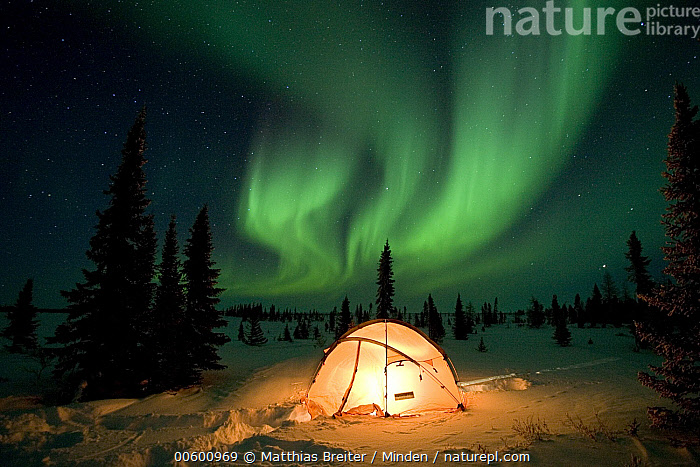 Northern lights or aurora borealis over illuminated tent, boreal forest, North America  ,  Astronomy, Aurora Borealis, Camping, Color Image, Forest Habitat, Horizontal, ILCP, Light, Night, Nobody, North America, Northern Lights, One Object, Photography, Tent, Wide-angle Lens,North America  ,  Matthias Breiter