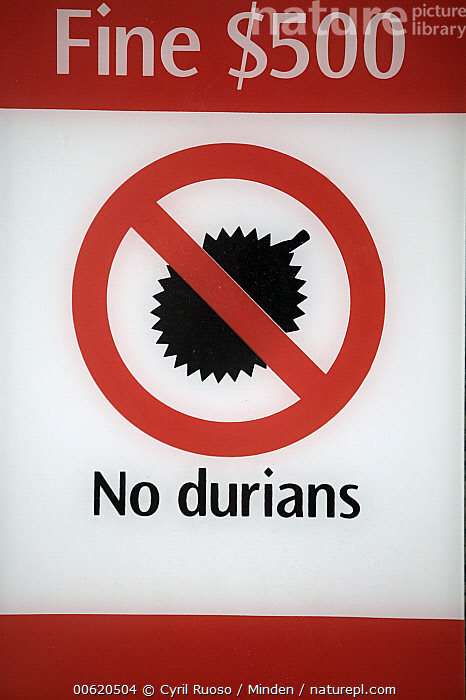 Durian (Durio zibethinus) sign forbidding Durian fruit in Singapore tram because of their unpleasant smell, Singapore, Color Image, Durian, Durio zibethinus, Fruit, Full Frame, Humor, Nobody, One Object, Photography, Sign, Singapore, Tram, Vertical, Wildlife,Durian,Singapore, Cyril Ruoso