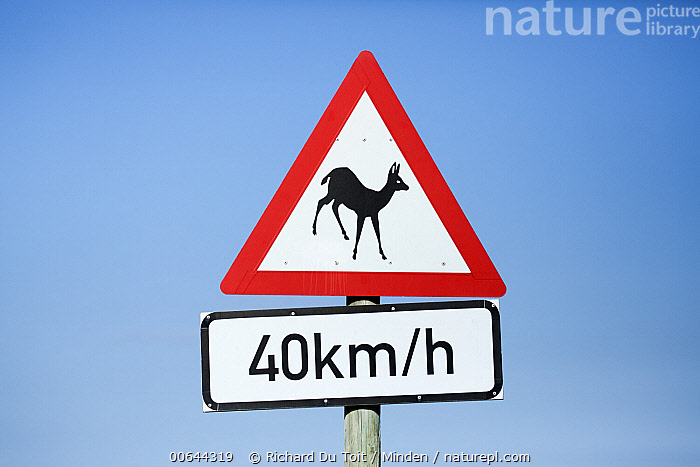Road warning sign, South Africa  ,  Adult, Color Image, Day, Front View, Full Length, Horizontal, Impala, Nobody, One Object, Outdoors, Photography, Road, Road Sign, South Africa, Warning Sign, Wildlife  ,  Richard Du Toit