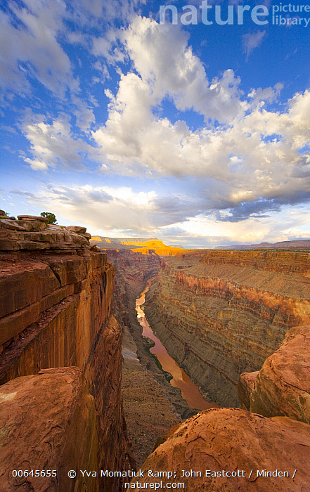 Cumulus clouds and the Coloraod River from North Rim, Grand Canyon National Park, Arizona  ,  Arizona,Blue Sky,Canyon,Color Image,Colorado River,Cumulus Cloud,Day,Erosion,Grand Canyon National Park,Horizon,Landscape,Nobody,North Rim,Outdoors,Photography,Vertical,Arizona,Blue Sky,Canyon,Color Image,Colorado River,Cumulus Cloud,Day,Erosion,Grand Canyon National Park,Horizon,Landscape,Nobody,North Rim,Outdoors,Photography,Vertical  ,  Yva Momatiuk & John Eastcott