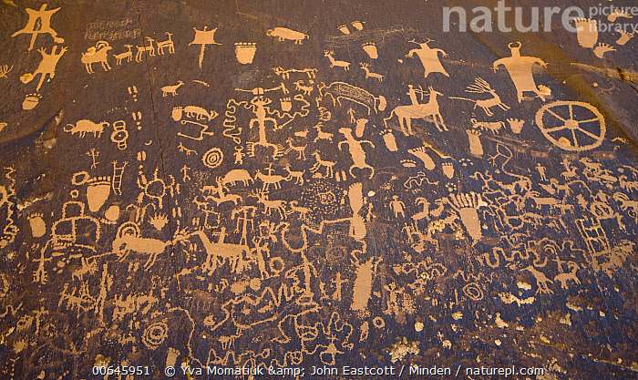 Petroglyph panel, showing humans, animals and symbols, etched in sandstone, Newspaper Rock State Park, Utah  ,  Ancient,Color Image,Day,Horizontal,Newspaper Rock State Park,Nobody,Outdoors,Panoramic,Petroglyph,Photography,Rock Art,Sandstone,Utah,Ancient,Color Image,Day,Horizontal,Newspaper Rock State Park,Nobody,Outdoors,Panoramic,Petroglyph,Photography,Rock Art,Sandstone,Utah  ,  Yva Momatiuk & John Eastcott