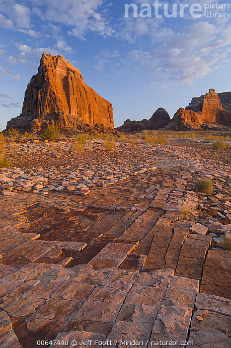 Dominguez Butte, Lake Powell, Glen Canyon National Recreation Area, Utah  ,  Blue Sky,Color Image,Day,Dominguez Butte,Glen Canyon National Recreation Area,Lake Powell,Landscape,Nobody,Outdoors,Photography,Tessellated Rock,Utah,Vertical  ,  Jeff Foott
