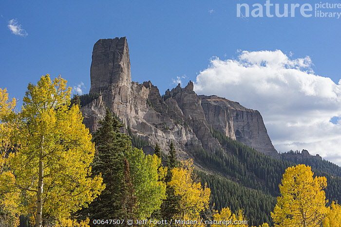 Chimney Rock and Courthouse Mountain, Uncompahgre National Forest, Colorado  ,  Autumn,Blue Sky,Chimney Rock,Color Image,Colorado,Courthouse Mountain,Day,Fall Colors,Horizontal,Landscape,Mountain,Mountain Range,Nobody,Outdoors,Peak,Photography,Populus tremuloides,Quaking Aspen,Tree,Uncompahgre National Forest,Yellow  ,  Jeff Foott