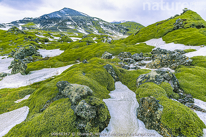 Moss-covered rocks and snow, Vik, Iceland  ,  Color Image,Day,Horizontal,Iceland,Landscape,Moss,Nobody,Outdoors,Photography,Rock,Snow,Vik,Winter  ,  Shane P. White
