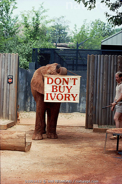 Elephant in Atlanta Zoo, USA with Don't Buy Ivory banner  ,  CONSERVATION,IR,MAMMALS,SIGN,TRADE,USA,VERTICAL,ZOO,NORTH AMERICA,ELEPHANTS  ,  IAN REDMOND