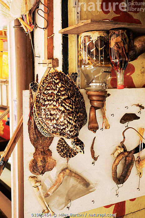 Hawksbill turtle shell for sale in shop in Singapore, TRADE,WILDLIFE TRADE,SOUTH EAST ASIA,DEATH,ENDANGERED,REPTILES,MEDICINE,VERTICAL,TURTLES,Asia,Chelonia, Turtles, Miles Barton
