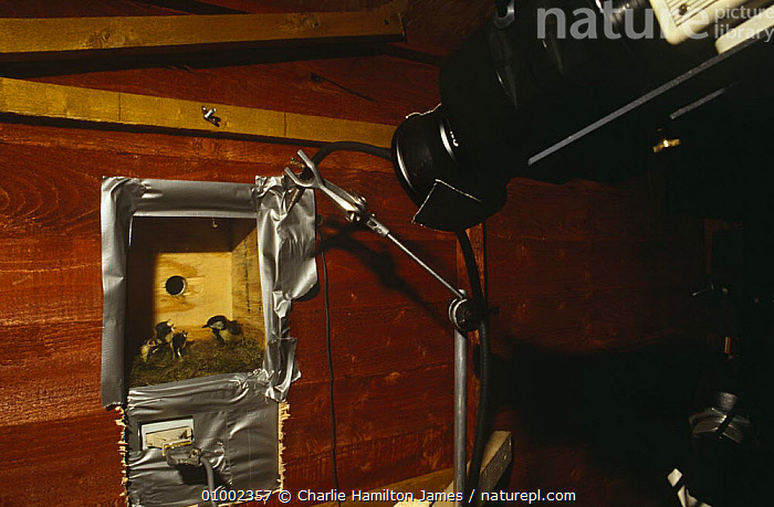 Film camera set up to remotely film Great Tit nest box. Bird in the Nest tv programme 1995  ,  ENGLAND,FILMING,NHU,OUTSIDE BROADCAST,Europe  ,  Charlie Hamilton James