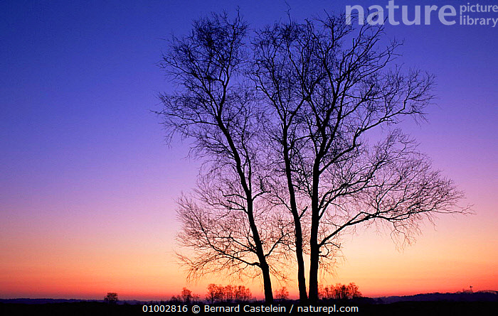 Sunset over Kalmthoutse Heide Nature Reserve, North Belgium, BELGIUM,DUSK,EUROPE,Evening,LANDSCAPES,PEACEFUL,RESERVE,SILHOUETTES,TREES,WINTER,Concepts,Plants, Bernard Castelein