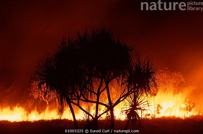 Fire at night in tropical eucalypt forest, Kakadu NP, Australia  ,  DC,DRAMATIC,EUCALYPT,FIRE,HORIZONTAL,KAKADU,NATIONAL PARK,NIGHT,NP  ,  David Curl