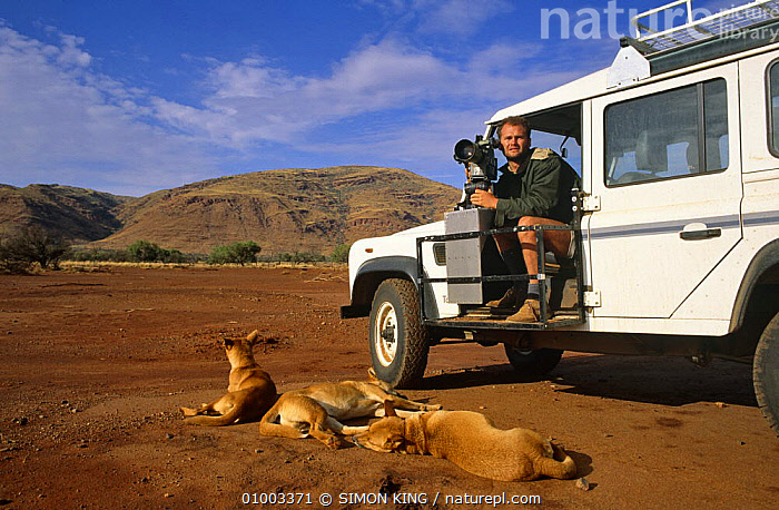 Simon King on location to film dingos; sitting in Land Rover with film camera, dingos sleeping nearby, Australia 1995  ,  AUSTRALIA,DINGOES,FILMING,FILMING IN WILD,HABITUATED,MAMMALS,NHU,VEHICLES  ,  SIMON KING