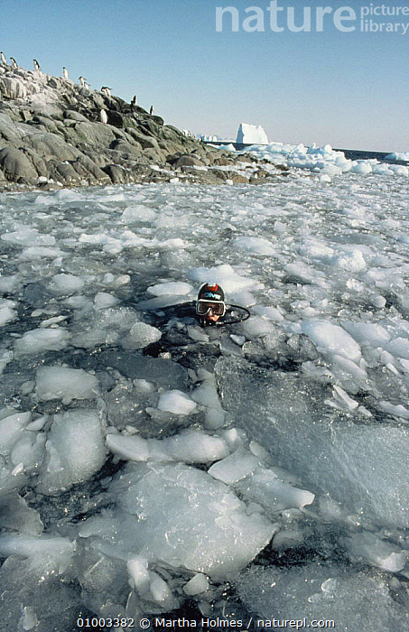 David Rootes, assistant on BBC television series Life in the Freezer, amongst brash ice while helping set up remote cameras to film Adelie penguins swimming, 1992, ANTARCTICA,COLD,DIVING,FILMING,ICE,NHU, Martha Holmes