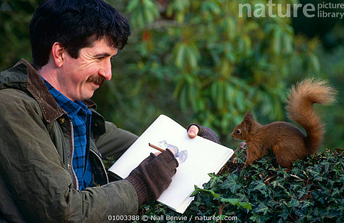 Artist Derek Robertson sketching a tame Red squirrel {Sciurus vulgaris} Perthshire, Scotland, UK, ART,DRAWING,EUROPE,MAMMALS,PEOPLE,RODENTS,SCOTLAND,SQUIRRELS,UK,VERTEBRATES,United Kingdom,British, Niall Benvie
