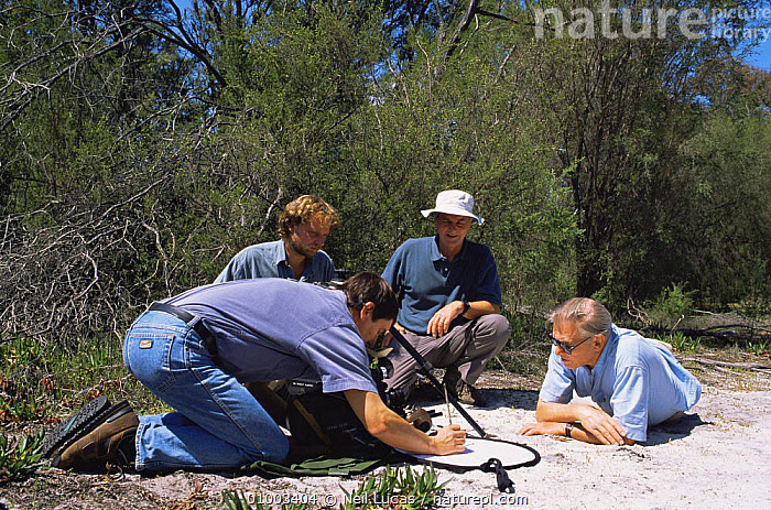 "BBC film crew on location in Western Australia, filming thynnid wasp for BBC series ""Private Life of Plants"", September 1993. R to L: Sir David Attenborough, Mike Salisbury, Richard Kirby  ,  AUSTRALIA,CAMERA,CAMERAS,FILMING,FILMING IN WILD,FOUR,GROUPS,NHU,PEOPLE,PLANTS,WASPS  ,  Neil Lucas"