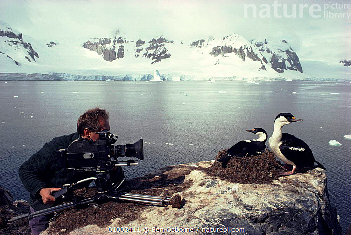 Ian McCarthy in Antarctica filming Blue-eyed cormorants for BBC television series 'Life in the Freezer'  ,  ANTARCTICA,BIRDS,BLUE,BLUE EYED,BO,CORMORANT,CORMORANTS,EYED,IAN,LIFEINFREEZER,MCCARTHY,NBSM544L,NHU,SEABIRDS,WILD  ,  Ben Osborne