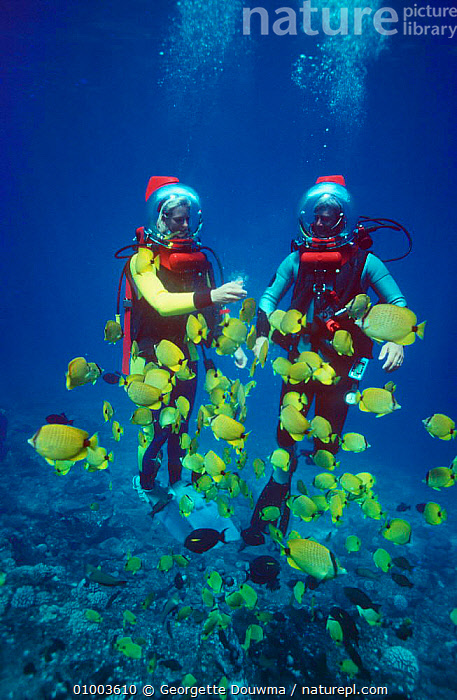 """Seatrek"" programme presenters Martha Holmes and Mike de Gruy feeding Butterflyfish off Hawaii, 1991 - BBC NHU television series, FEEDING,FILMING,FISH,MARINE,PACIFIC,PEOPLE,PORTRAITS,PRESENTER,UNDERWATER,USA,VERTICAL,North America,Catalogue1, Georgette Douwma"