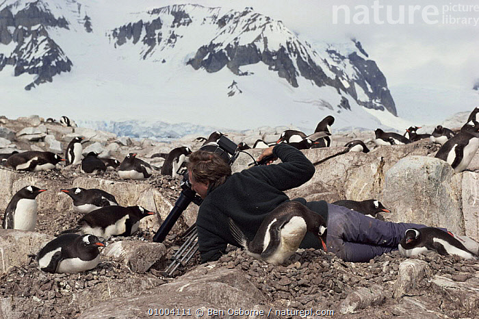 Ian McCarthy filming Gentoo penguins using periscope, for Life in the Freezer, 1992  ,  ANTARCTICA,FILMING,NHU,PENGUINS  ,  Ben Osborne