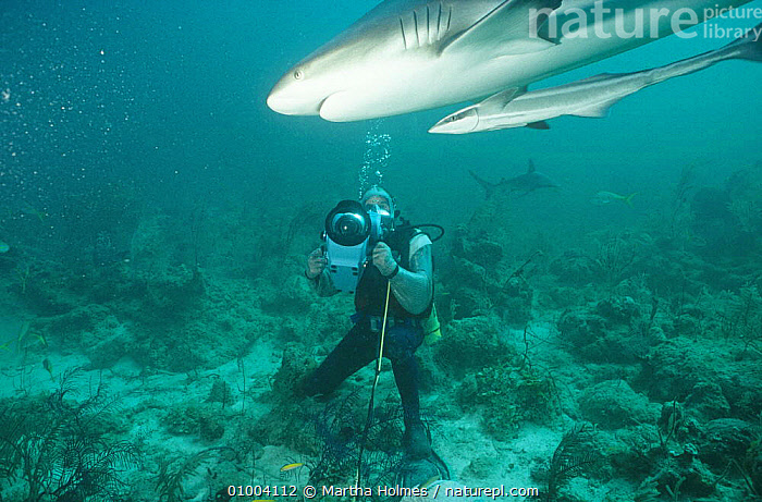 Simon King filming sharks in chain mail suit for BBC television programme 'Hotshots', June 1994  ,  FILMING,FILMING IN WILD,FISH,MARINE,NHU,SHARKS,TV,UNDERWATER  ,  Martha Holmes