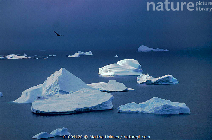 Sunlit iceberg in field of icebergs with stormy sky, Antarctica, ATMOSPHERIC,HORIZONTAL,ICEBERGS,MH,SEA,SKY,STORMY,Catalogue1, Martha Holmes