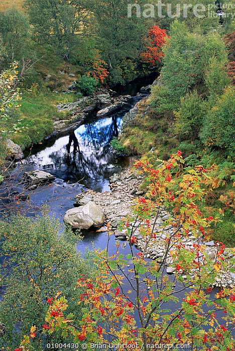 Autumn colours in Glen Lethnot near Montrose. Scotland  ,  AUTUMN,EUROPE,LANDSCAPES,RIVERS,SCOTLAND,streams,UK,VERTICAL,United Kingdom,British  ,  Brian Lightfoot
