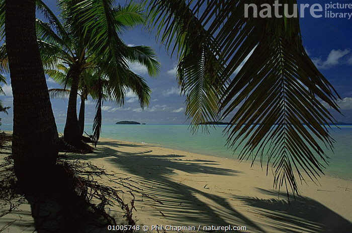 Coconut Palms and coral lagoon. Aitutaki, Cook Islands.  ,  BEACHES,COASTS,PACIFIC ISLANDS,PALMS,TREES,Plants  ,  Phil Chapman