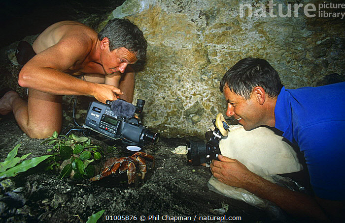 "Cameraman Mike Pitts filming Coconut Crab {Birgus latro} on Henderson Island for BBC television series ""Nomads of the Wind"", 1992  ,  ARTHROPODS,CAMERA,CAMERAS,CRUSTACEANS,FILMING,FILMING IN WILD,HERMIT CRABS,INVERTEBRATES,NHU,OCEANIA,PEOPLE,TWO,WIND,Weather  ,  Phil Chapman"