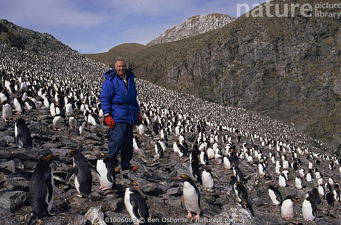 Sir David Attenborough in Macaroni penguin colony. South Georgia, 1992. On location for BBC series Life in the Freezer, ANTARCTICA,BIRDS,NHU,PENGUINS,PORTRAITS, Ben Osborne