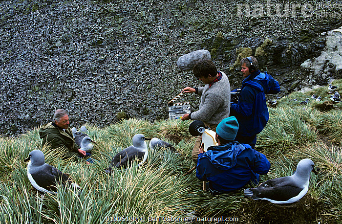 Filming Sir David Attenborough in Grey Headed albatross colony for BBC Life in the Freezer, film crew,FILMING,NHU, Ben Osborne