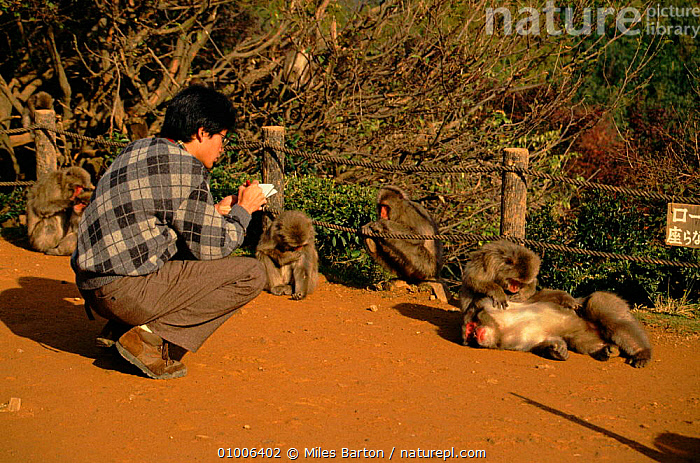 Scientist observing macaques, Japan  ,  PEOPLE,A,MONKEY,FOR,ALL,SEASONS,ARASHIYAMA,HORIZONTAL,JAPAN,PRIMATES,MB,HONSHU,SCIENTIST,MAMMALS,RESEARCH,ASIA,MONKEYS  ,  Miles Barton