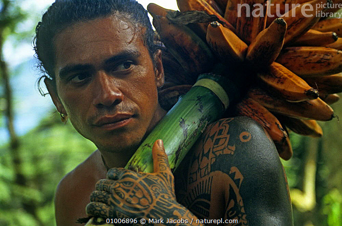 Marquesan with native Banana crop, filmed for BBC television series 'Nomads of the Wind', Polynesia, 1992, EDIBLE,FRUIT,MONOCOTYLEDONS,MUSACEAE,PEOPLE,PLANTS,POLYNESIA,PORTRAITS,TRIBES,WIND,Weather, Mark Jacobs