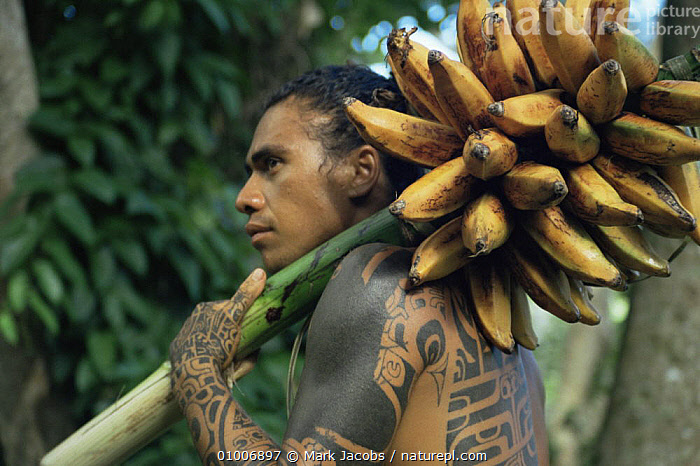Marquesan with native banana crop for tv series Nomads of the Wind, 1992, FRUIT,NHU,OCEANIA,PACIFIC,PEOPLE,PLANTS,PORTRAITS,TRIBES,WIND,Weather, Mark Jacobs
