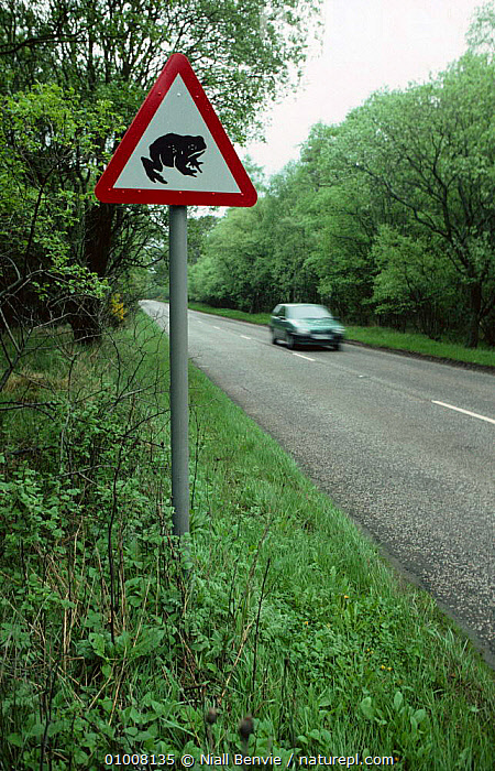Toad (Bufo bufo) crossing warning sign, part of UK species protection, Scotland, AMPHIBIANS,ANURA,CONSERVATION,INFORMATION,ROADS,SCOTLAND,SIGNS,TOADS,TRAFFIC,UK,VEHICLES,VERTEBRATES,VERTICAL,WARNINGS,Europe,United Kingdom,British,car, United Kingdom, Niall Benvie