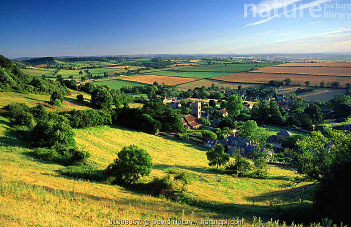 Corton Denham village and surrounding countryside, near Yeovil in Somerset, England.  ,  BUILDINGS,CHURCH,FARMLAND,FIELDS,GREEN,HOUSES,LANDSCAPES,SUMMER,VILLAGES,Europe,ENGLAND  ,  David Noton