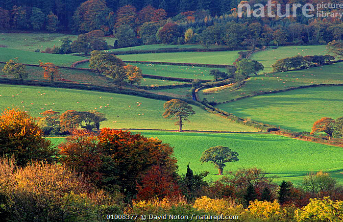 Autumn colours near Luscombe, Exmoor, Somerset, England., COUNTRYSIDE,FIELDS,LANDSCAPES,ROAD,TREES,Plants,Europe,ENGLAND, David Noton