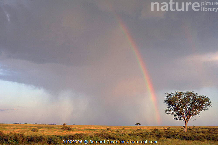 Rainbow in stormy sky over Seronera Valley, Serengeti National Park, East Africa, NP,LANDSCAPES,WEATHER,STORMS,SKIES,RAIN,RAINBOWS,National Park,Africa,EAST-AFRICA,,Serengeti National Park, UNESCO World Heritage Site,, Bernard Castelein